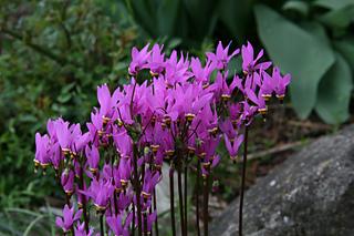 Gardencanadensis.ca