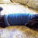 Size Small Dog Sweater pattern