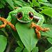 Tree Frog pattern