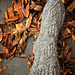 Syyskukkia socks pattern