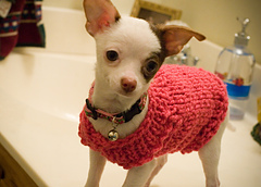 Lucy's Sweater
