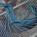 Schmetterwurm pattern