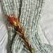 Druthers Socks pattern