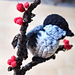 Singing Crochet Chickadee pattern