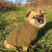 Little Hipster Dog Sweater pattern