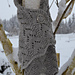 Winter Birch pattern