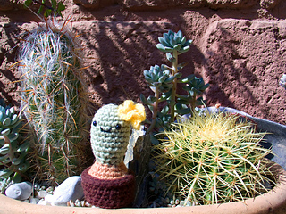 11 Crocheted Cactus Patterns | The Crochet Crowd | 240x320