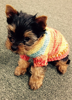 Ravelry Tricot S First Dog Sweater Pattern By Starla Knits