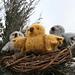 Baby Owl Takes Flight pattern