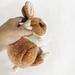 Cinnamon Dutch Bunny pattern