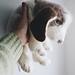 Beagle Puppy pattern