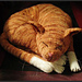 Jingga the Orange Tabby Cat pattern