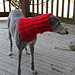 Dizzy Lily: A Snood For A Hound (Greyhound) pattern