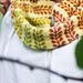 Budding Vines Cowl pattern