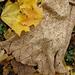 Blätterrauschen pattern