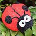 Spots the Ladybird pattern
