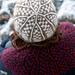 Checkered beanie pattern