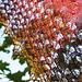 Lady Autumn pattern