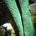 Hibernia pattern