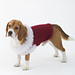 Celebrator Dog Sweater pattern