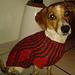 Hundepullover gestrickt pattern
