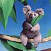 Baby Koala pattern