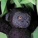 Gorilla pattern