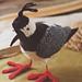 Lapwing bird pattern