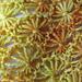 Dandelion Lace Scarf pattern