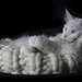 Giant Wool Kitty Bed pattern