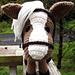 Horse Amigurumi with Accessories pattern