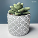 Desktop Succulent pattern
