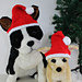 Dog Christmas Santa Hat pattern