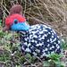 Guinea Fowl pattern