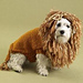 King of the Beasts (Lion) Dog Sweater pattern