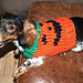 Jack-O-Lantern Dog Sweater pattern