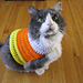 Candy Corn Pet Sweater pattern
