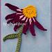 Echinacea Sonnenhut pattern