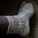 Corallinus Socks pattern