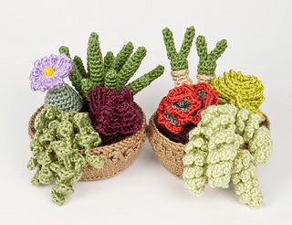 Succulent Collections 3 & 4 multipack.