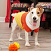 Candy Corn Dog Sweater pattern