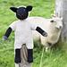 Viki, das Schaf / Viki the Sheep pattern