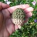 acorn pattern