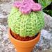 Succulent plant pattern
