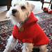 Hoodie Dog Coat pattern