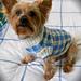 Sunday Picnic Dog Sweater pattern