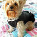 Little Black Dress With Pearls Dog Sweater pattern