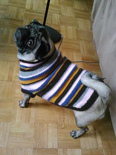 Pug Dog Sweater pattern by Angelcatkins (Elizabeth  , Ravelry