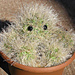 Claude the Cactus pattern
