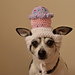Small Dog Cupcake Hat pattern